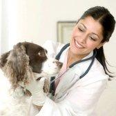 Як лікувати ентерит у собаки