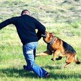 Як лікувати собачі укуси