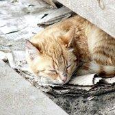 Як зробити будиночок для бездомного кота