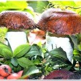 Як зробити грибочки для прикраси саду