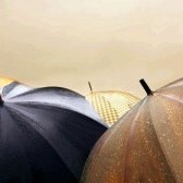 Як доглядати за парасолькою
