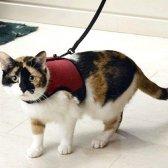 Як вибрати поводок для кішки
