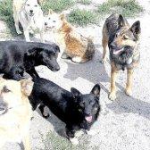 Як вибрати ультразвуковий відлякувач собак