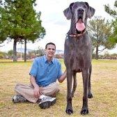 Яка порода собак найбільша в світі