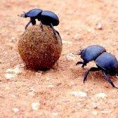 Які є жуки