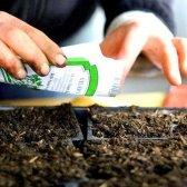 Які насіння треба садити в березні