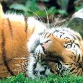 Які тварини потребують охорони