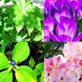 Яке рослина саме отруйна