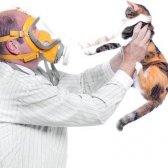 Чи можна заводити кішку, якщо є алергія на пил
