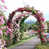 Неповторний дизайн саду на основі арок і критих алей