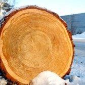 Чому стовбури дерев круглі