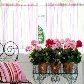 Правила вибору квітів для квартири