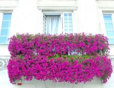 5 Рослин для вирощування на балконі