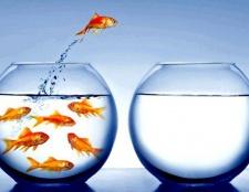 Аналіз самоосвіти і особистісний ріст