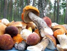 Чим корисні гриби і як часто їх можна їсти
