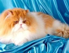Чим шкідлива котяча шерсть