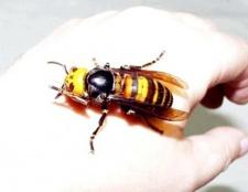 Що робити якщо вкусила оса, бджола або джміль