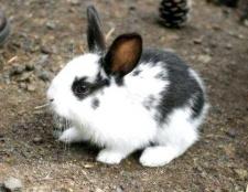 Що їдять кролики