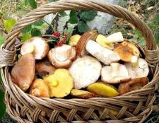 Що потрібно знати про гриби