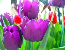Що символізує фіолетовий колір