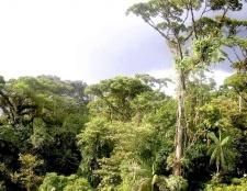 Які є тварини вологих екваторіальних лісів