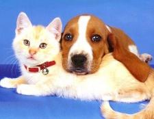 Де можна залишити на час відпустки собаку і кішку
