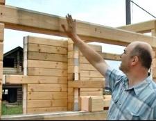 Грибок деревини: профілактика та способи боротьби