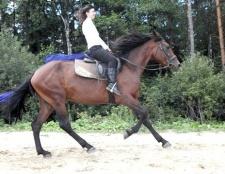 Як навчитися їздити на коні верхи