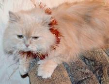 Як обробляти рану після кастрації кота