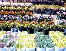 Як відкрити квітковий магазин