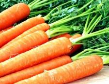 Як підготувати насіння моркви до посадки