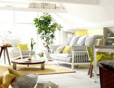 Як правильно розставити рослини в квартирі