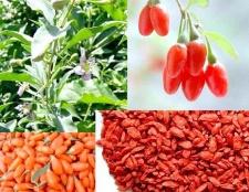 Як застосовувати ягоди годжі для схуднення