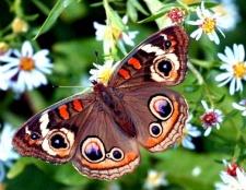 Як залучити в сад метеликів: оформлення строкатою клумби