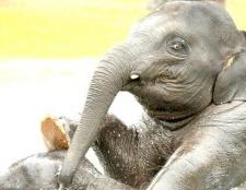 Що люблять слони