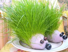 Як зробити трав'яного їжачка з носка