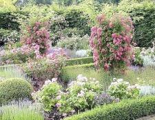 Як створити сад ароматів