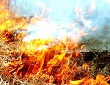 Як впливає на навколишнє середовище спалювання сухої трави