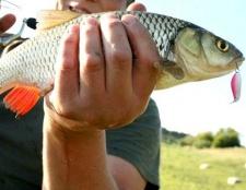Як вибрати блешню для риболовлі на мілководді