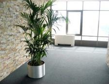 Як вибрати невибаглива рослина в офіс