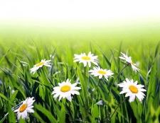 Як заготовлювати лікарські трави