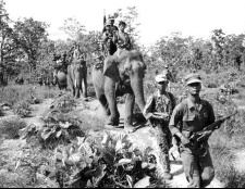 Як тварини допомагали людям під час війни
