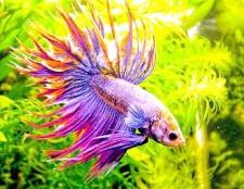 Які бувають види акваріумних фільтрів