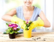 Які квіти краще всього для дому