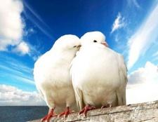 Які породи голубів існують