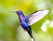 Які птахи живуть всього рік