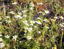 Які рослини відносяться до покритонасінних