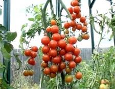Які насіння помідорів найкращі