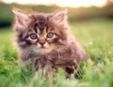 Які існують популярні котячі імена