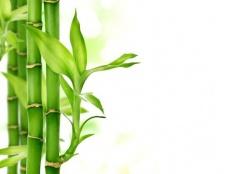 Яке рослина саме швидкозростаюче